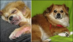 A before and after photo of a JAR rescued pup