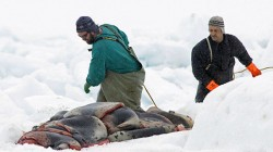 Seal hunters in Canada