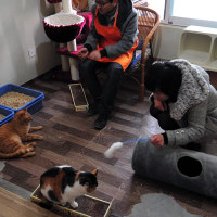 Volunteers and the cats at PPAR